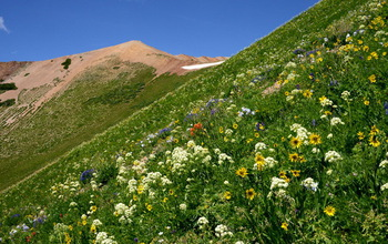 Flowering plants on a mountain
