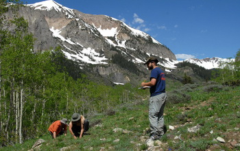 Three researchers counting wildflowers in study plots in the Rocky Mountains