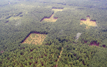 Fragments of open savannah surrounded by pine plantation, in a Savannah River Site experiment.