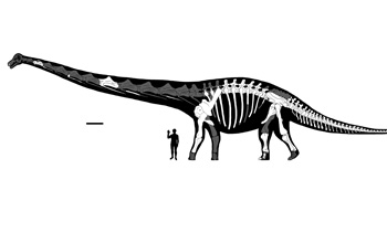 reconstructed skeleton and silhouette