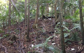 Scientists at NSF's Luquillo Critical Zone Observatory are tracking drought in the rainforest.