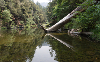 Northern California's Eel River surrounded by trees