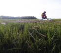 Patrick Kearns samples salt marsh sediments from West Creek on Plum Island.