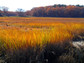 Sunset over a salt marsh at Plum Island, Massachusetts, as autumn arrives.