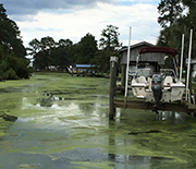 Algae blooms in hurricane floodwaters.
