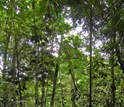 An 18-year-old second-growth wet tropical forest in Costa Rica that was once a pasture.