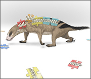 Reconstruction of Thrinaxodon; fossil bones came from the Early Triassic, 251-241 million years ago.