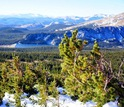 Researchers will study the biodiversity of subalpine forests in Colorado's Rocky Mountains.