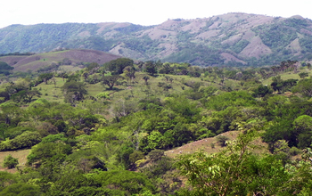 Photo of small patches of tropical dry forest  on hills
