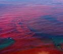 NSF Coastal SEES grantees are studying communities threatened by harmful algae blooms.