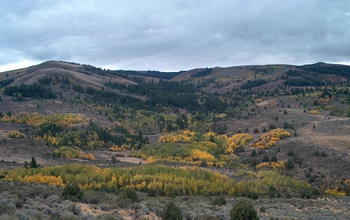 Trees and hills at the Reynolds Creek in southwest Idaho.