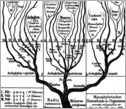 The tree of life as viewed by scientist Ernst Haeckel in the late 1800s.