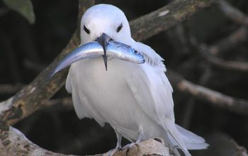 Photo of bird with fish in its beak