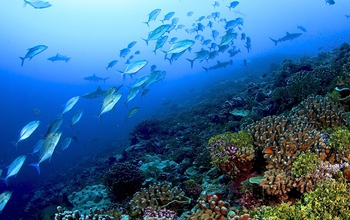 Fish swimming by a healthy coral reef in the Line Islands in the central Pacific Ocean.