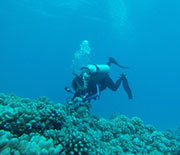 Diver checking coral reef.