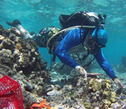NSF Moorea LTER researcher Vincent Moriarty helps with placing settlement tiles on the back reef.