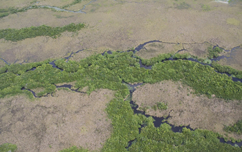 Detail of small creeks where freshwater marshes (brown) and mangroves (green) meet.