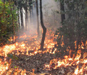 Experimental fire burning the understory of a forest between Cerrado and Amazonia, Brazil.