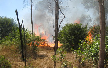 Grasses on fire in Mato Grosso, Brazil