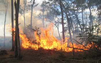 An experimental fire in the Brazilian forest