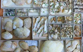 collection of uncurated Pleistocene fossils