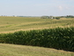 Corn fields in Iowa: Site of NSF's Intensively Managed Landscapes Critical Zone Observatory (CZO).
