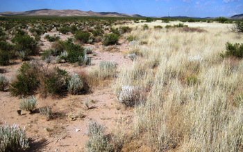 A shift from shrubland (left) to grassland (right) in the Chihuahuan Desert of New Mexico.