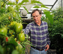 Scientist Harry Klee and his colleagues identified genes crucial to tomato flavor.
