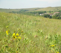Wildflowers bloom in Konza Prairie's grasslands during summer