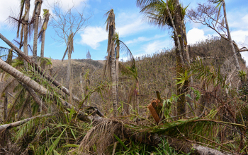 Puerto Rico's forests and streams were dramatically changed by Hurricane Maria's hit on the island.