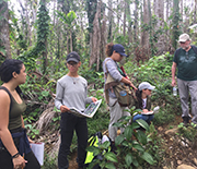NSF Luquillo researchers work to plant new trees in hurricane-damaged forests.