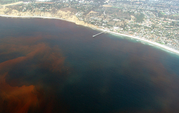 A past red tide off La Jolla, California. As in Florida, ocean waters were stained crimson.