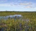 freshwater wetlands in Acadia National Park