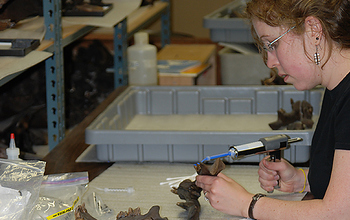 researcher working on fossils in a lab