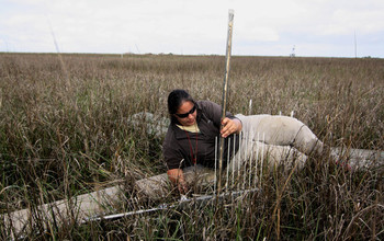 Surface-elevation measurement in a marsh near Myrtle Grove, Louisiana.