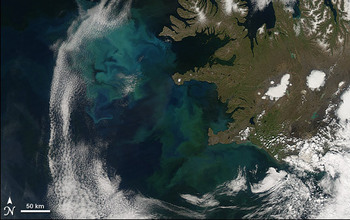 The bright blue and green colors in this satellite image show the North Atlantic Bloom.