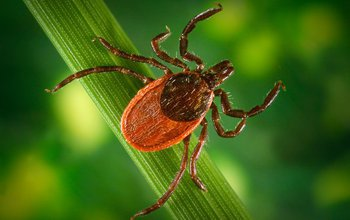 May is Lyme Disease Awareness Month: Do you know where the ticks are?