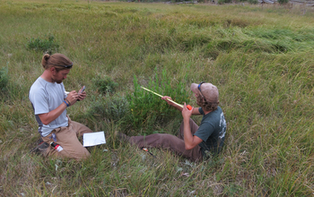 Two researchers with instruments working on Yellowstone's northern range clip willows