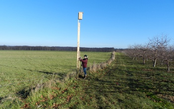 A woman works on the post of of a kestrel nest box and tower.