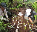 Project Technician and field assistant Timo Sullivan outplanting hybrid and pure-taxon seedlings
