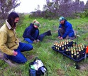 Three scientists with planting experimental plants
