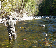 A researcher taking measurements in a creek.
