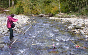 A researcher takes observations from a grid placed in a creek to study spawning and sediment grain size.