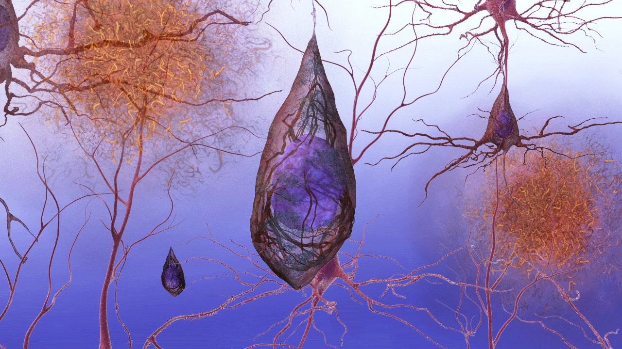 Science And Technology Quot Inside The Brain Unraveling The