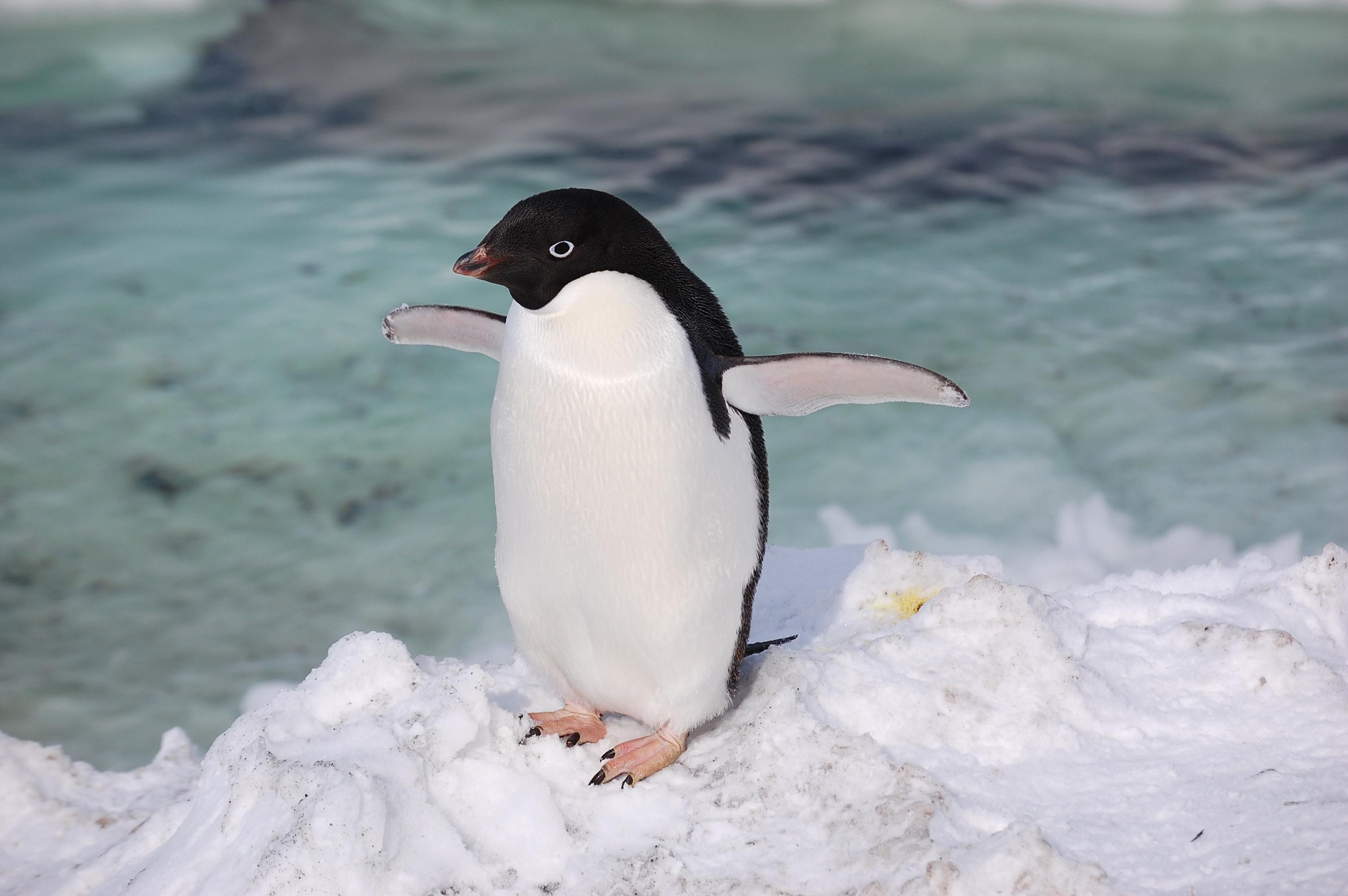 Penguin contracting