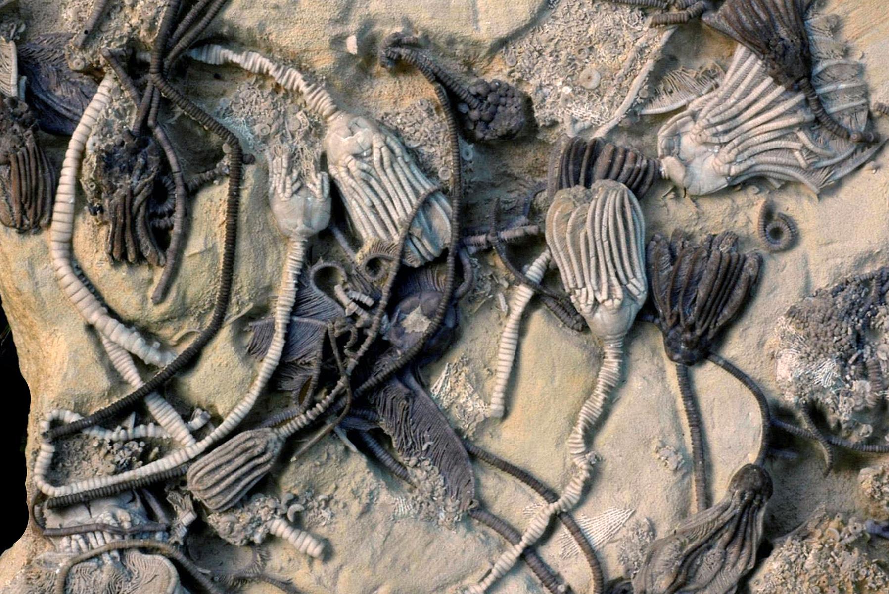 Ископаемые животные фото