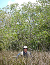 Scientist Victor Rivera-Monroy at the transition zone between mangroves and freshwater plants.