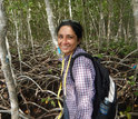 Biologist Meenakshi Jerath obtains samples of a mangrove forest in the Shark River Estuary.