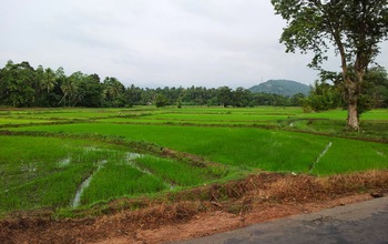 Rice farmers and others in Sri Lanka are contracting a kidney disease known as CKDu.