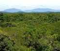 Photo of rainforest at Rio Cachoiera Nature Reserve in Brazil.
